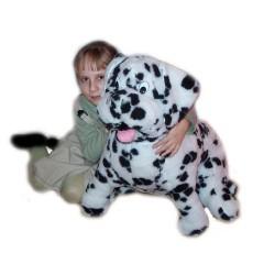 Dalmatyńczyk duży siedzący